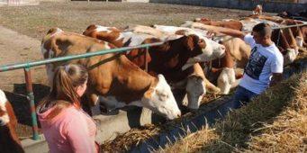 Дуално образовање: Ђаци гаје краве, шљиве и ламе